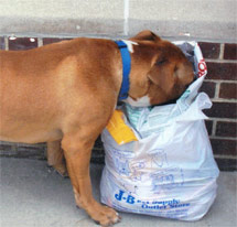 Help us Feed Homeless Animals this Holiday Season